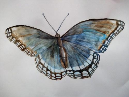 Papillon à l'aquarelle avec la technique sèche