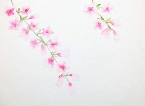 Comment peindre des fleurs de cerisier à l'aquarelle facilement