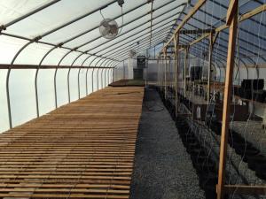 20110310 Empty Greenhouse