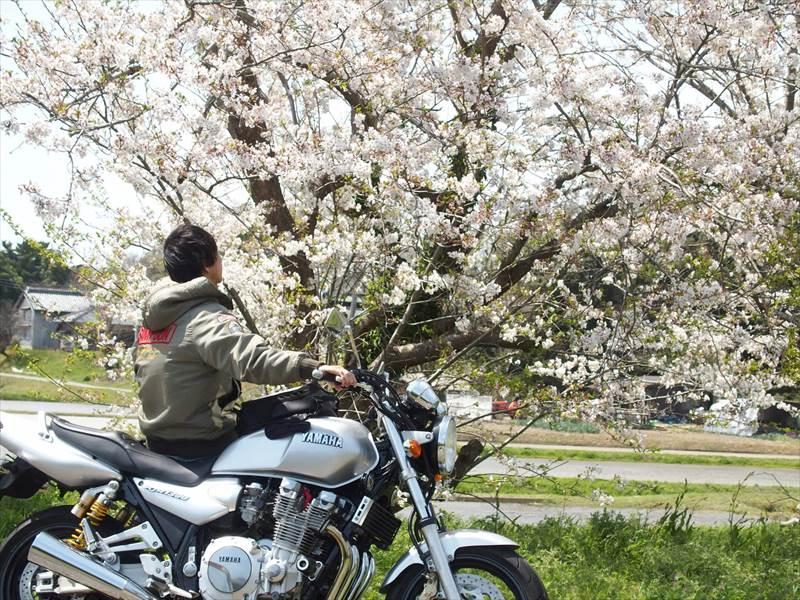 桜とバイクと僕の写真