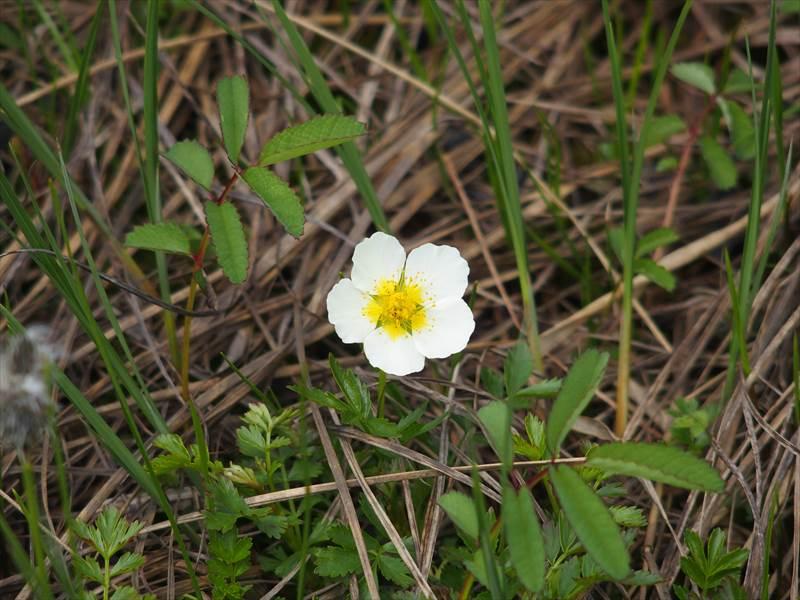 神仙沼の湿地に咲いていた花3