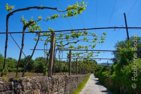 Paysage typique du chemin portugais