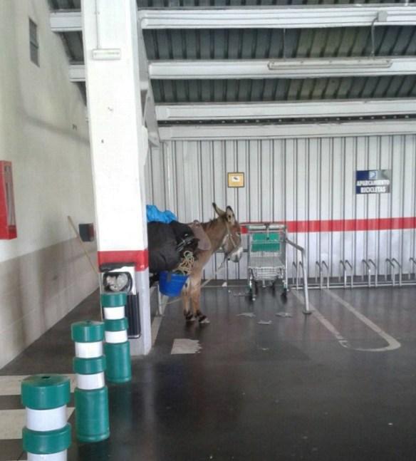 Parking pour les ânes du chemin ;-)