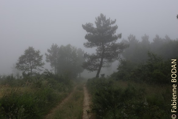 Camino del Invierno de Rodeiro à A Laxe
