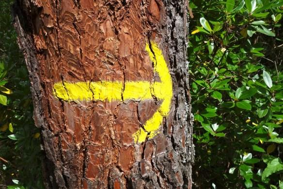 Flèche jaune Compostelle