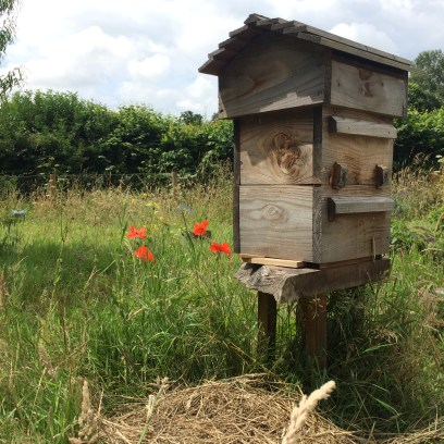 Poppies and an empty hive