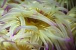 hrakleio_3_aquarium_knwssos_volta-428bb