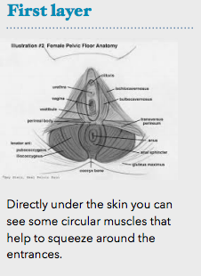 Exploring the vulva