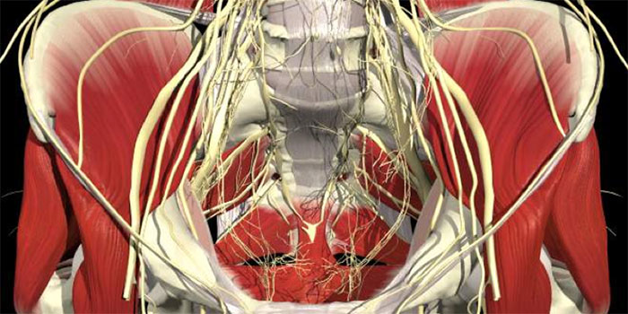 Pelvic image representing pudendal neuralgia