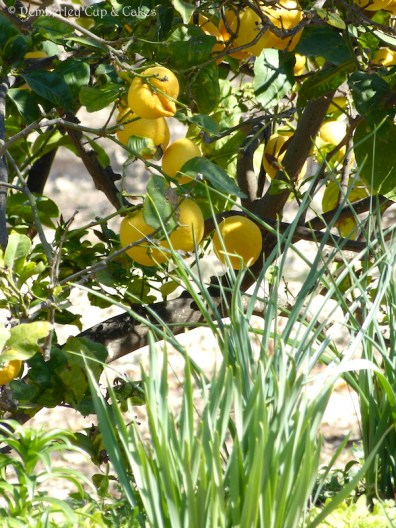 Lemon Bundt Cake {Lemon Tree}