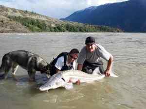 Sturgeon Fishing Whistler and Lillooet British Columbia Canada