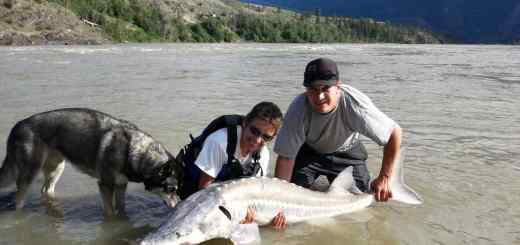 Sturgeon Fishing BC