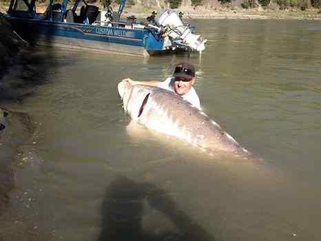 Giant Sturgeon Fishing Charters