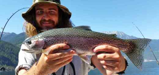 Big Rainbow Trout fishing BC