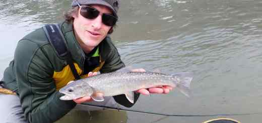 Fly fishing Bull Trout in BC