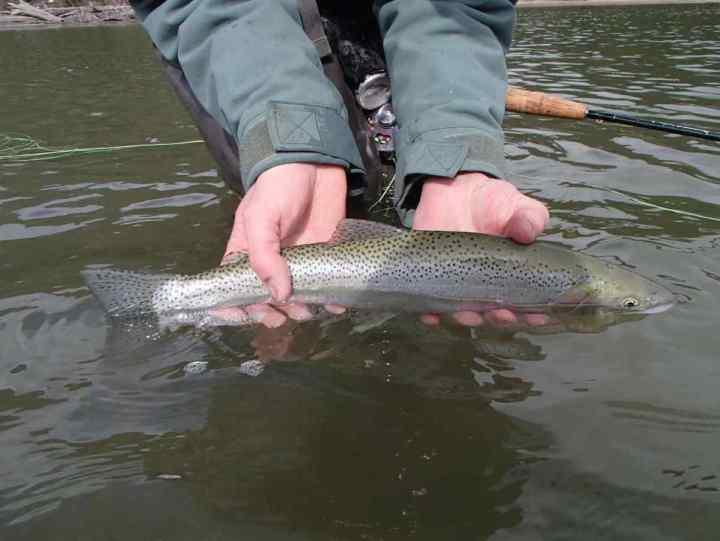 Fishing in Pemberton