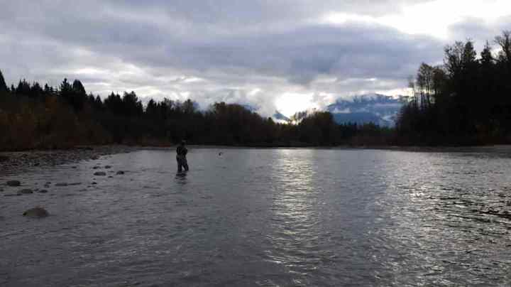 Chum Salmon Jumping