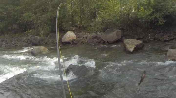 Big rainbow Trout trying to shake a fly hook