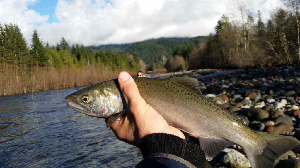 Squamish Fly Fishing