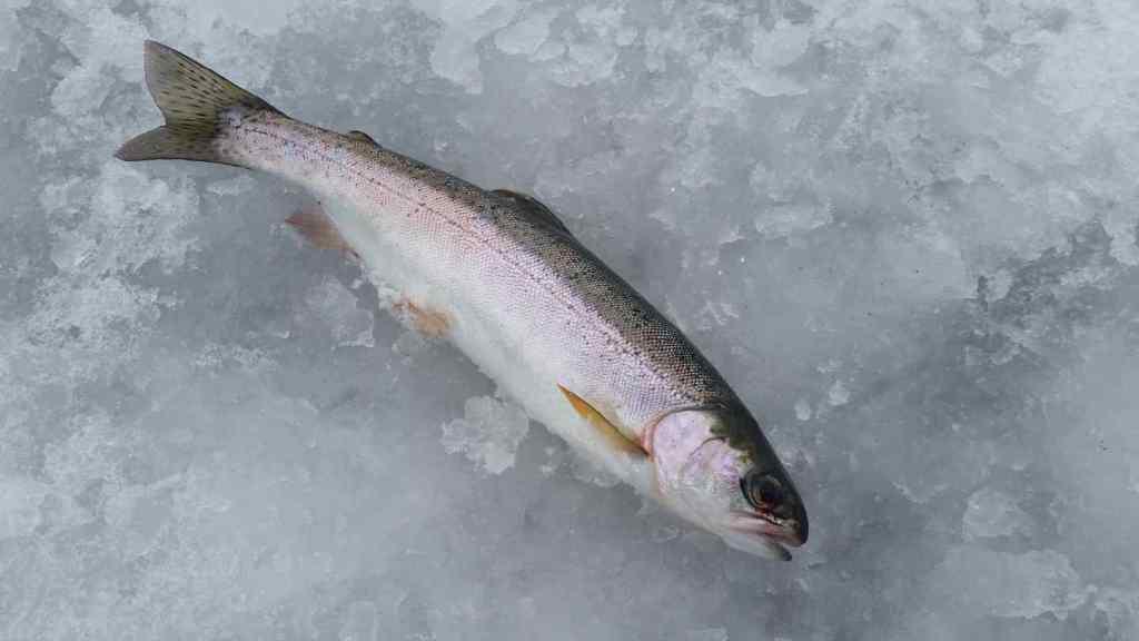 Canada Ice fishing trips