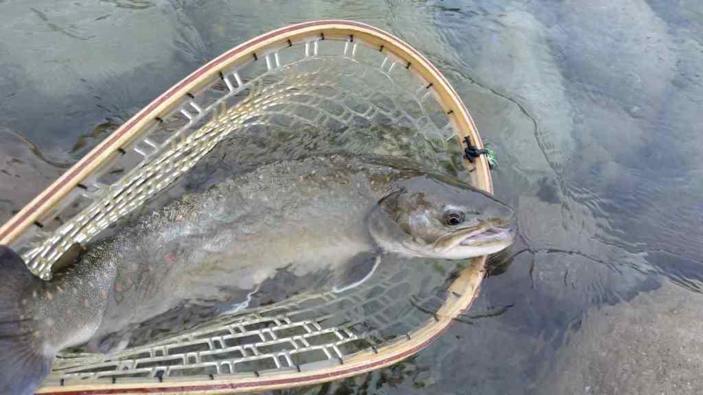 Fly Fishing Squamish BC