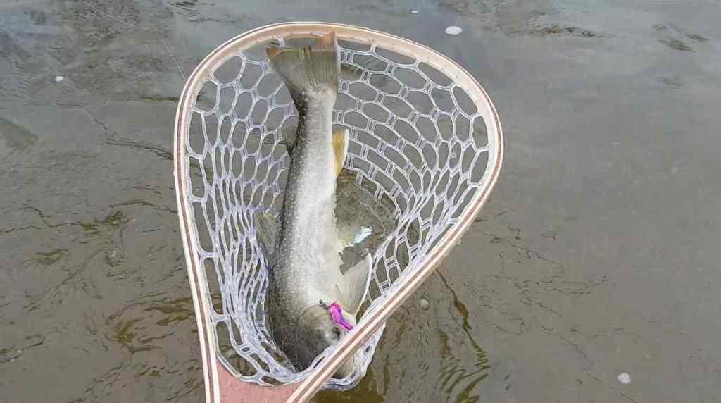 Big fish fill a landing net