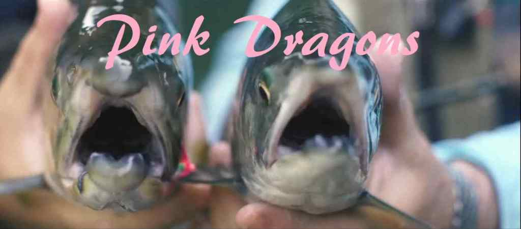 Pink Dragons Pink Salmon Fly Fishing Canada