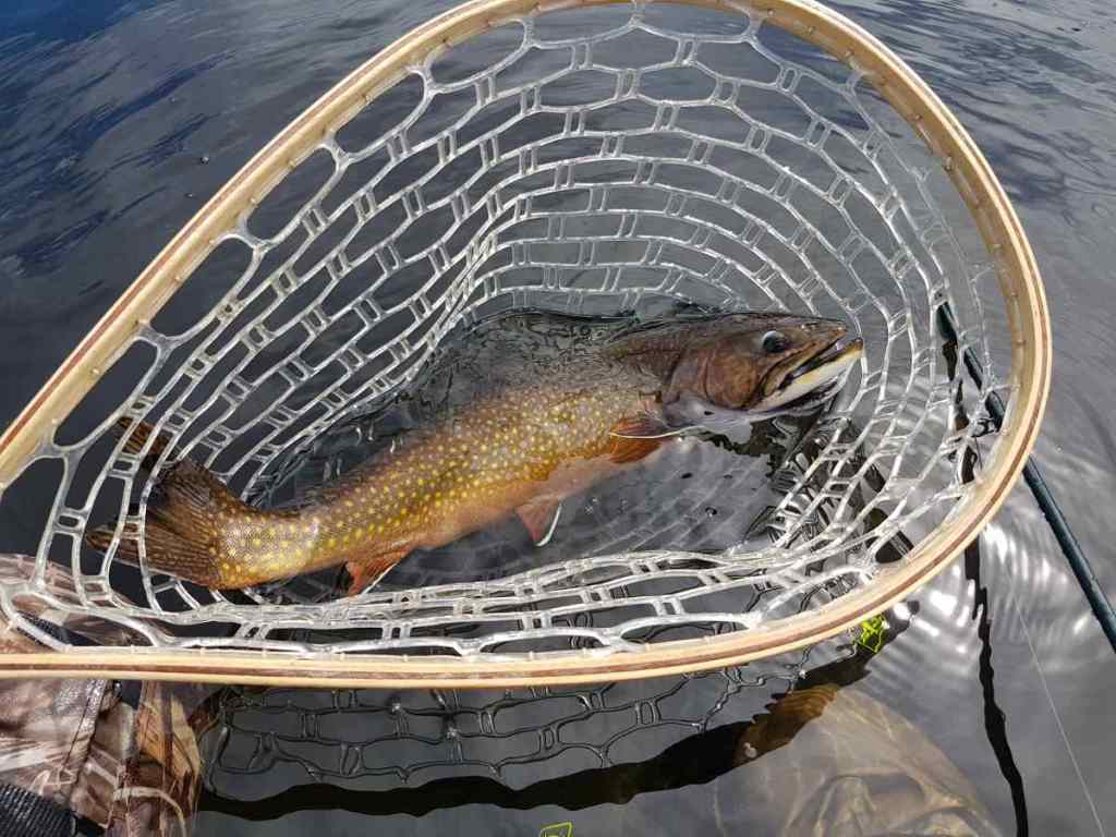 Massive Brook Trout Fly fishing Trips in British Columbia Canada