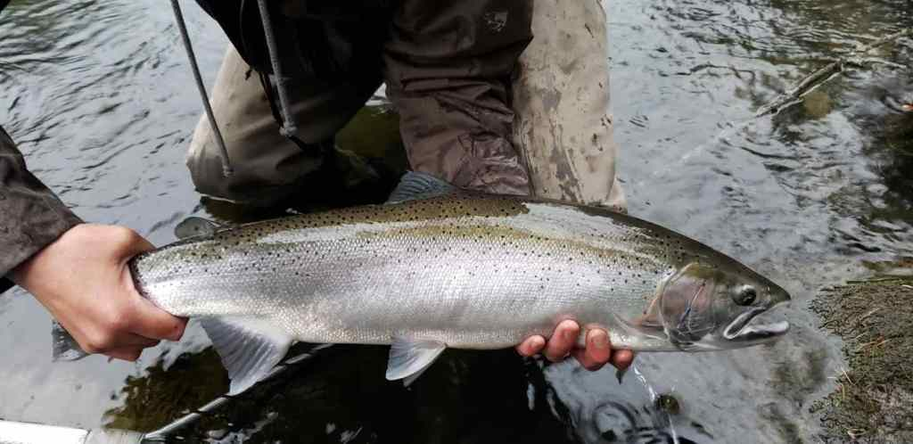 Steelhead fishing in BC