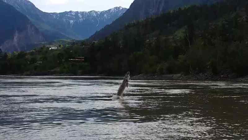 Sturgeon fishing trips in Canada