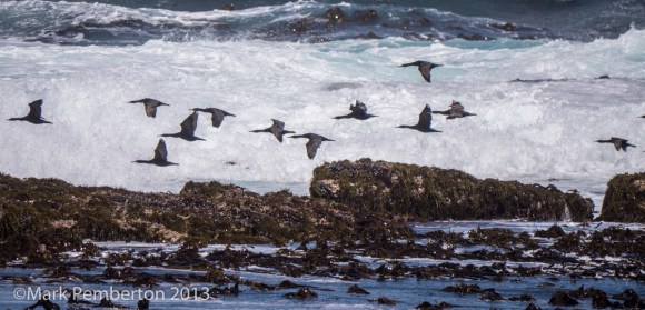 , Cape of Good Hope, Cormorants, Cape Town