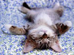funny-cat-sleeping-wallpaper