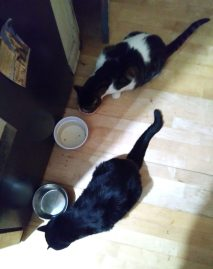 Cats Eating 2