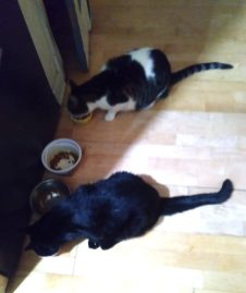 Cats Eating 4