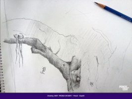 A007-PACSOA-Pencil-20130811 Students drawings - August 2013 - A007 PACSOA Pencil 20130811 - Students drawings – August 2013