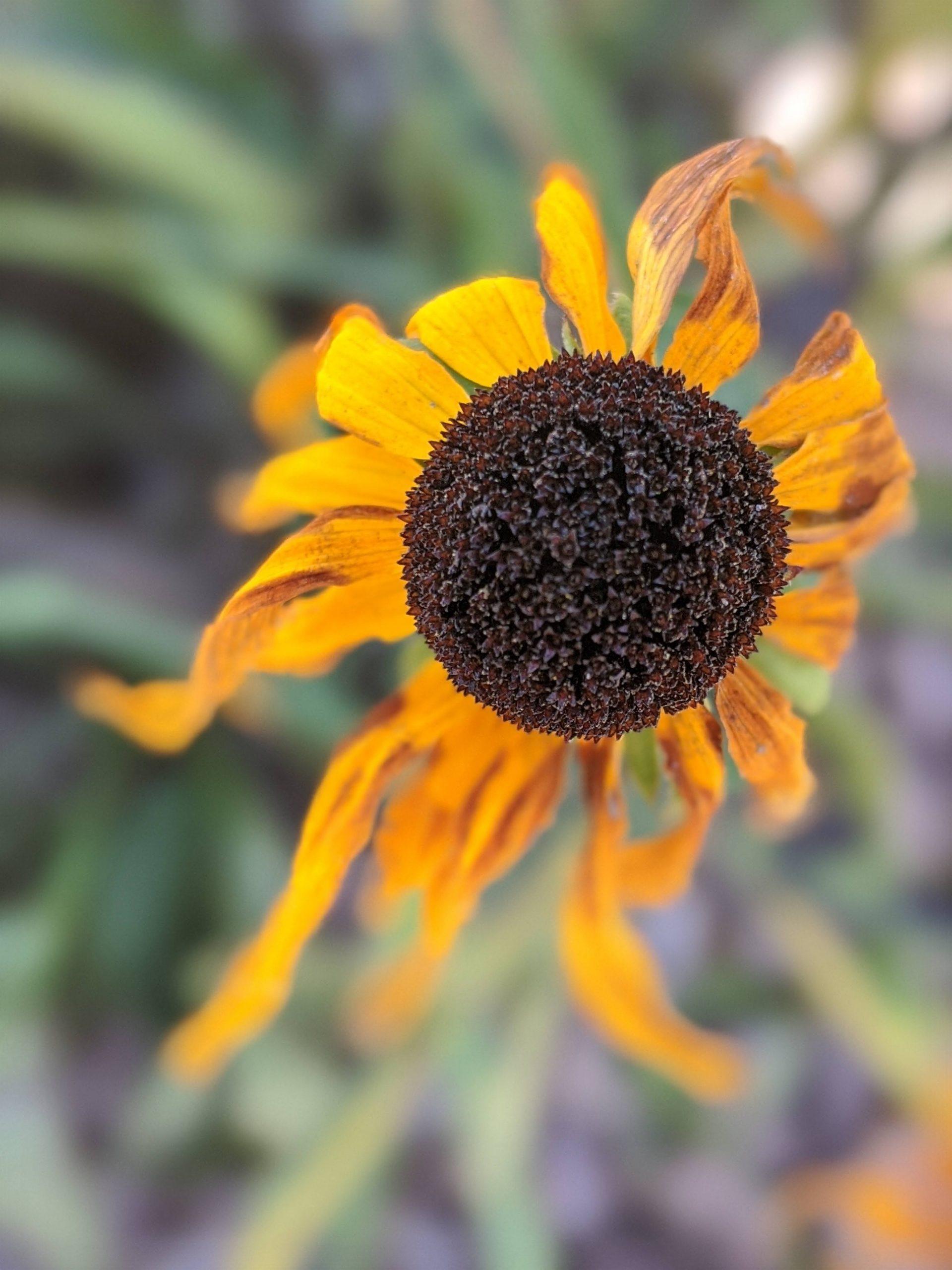 An abundance of flowers dot the prairie in South Dakota