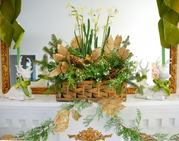 Poinsettia, juniper, paper whites, velvet ribbon, and gold accents mingle merrily in my green & gold Christmas living room!