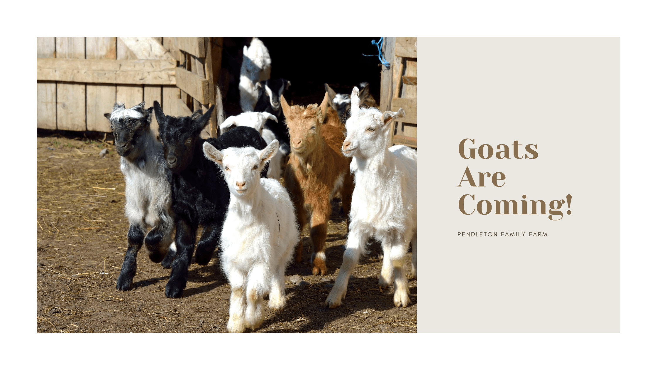 Goats are coming to the pendleton family farm