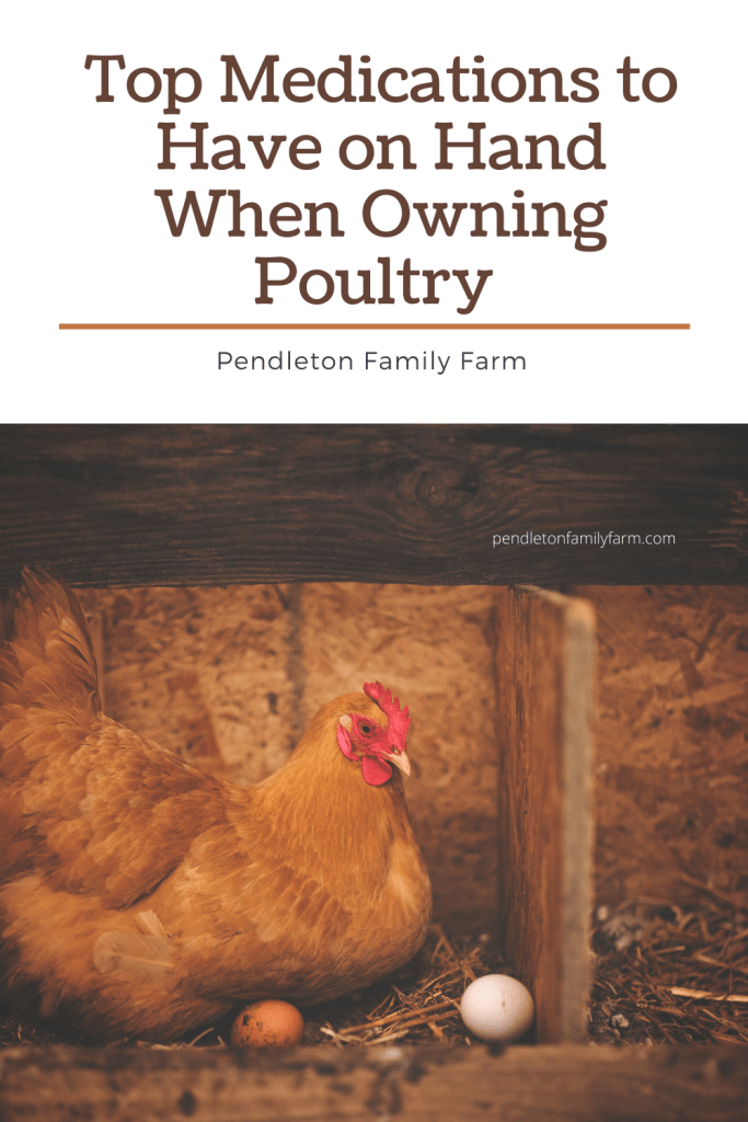 Top medications to have on hand when owning poultry