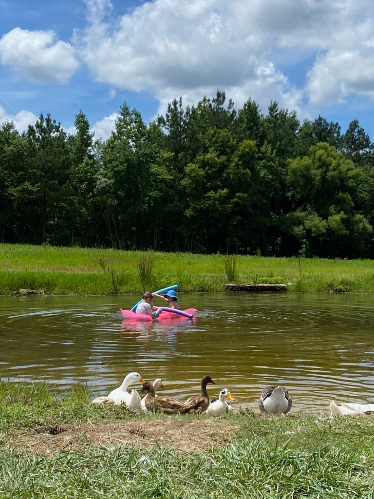 kids swimming in pond while ducks watch
