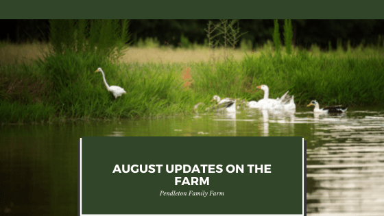 August Updates on The farm
