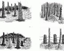 Pen drawings Tree Trunks