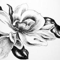 pen_ink_drawing_flowers