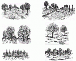 Pen and Ink Tutorial: Trees