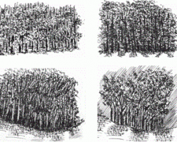 pen and ink tutorial: background foliage