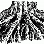 Learn to Drawn an Old Root