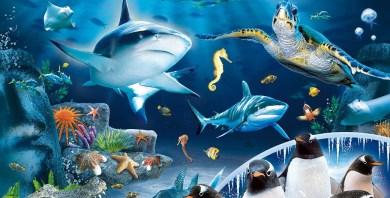 Image result for Sea Life London Aquarium