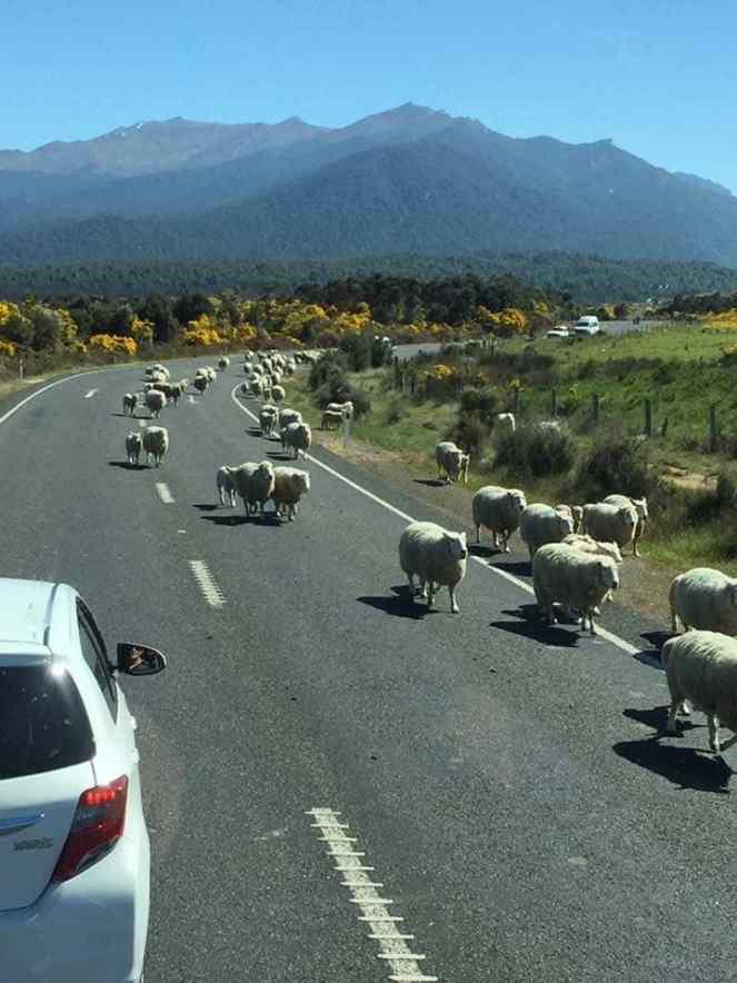 Ingin mengemudi di NZ? Terjemahkan SIM Anda