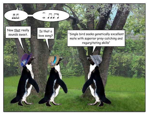 birdspring-3.jpg
