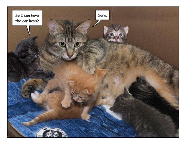 kittenbday-4.jpg
